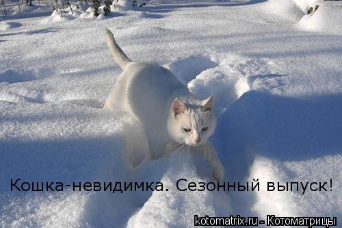 Котоматрица: Кошка-невидимка. Сезонный выпуск!