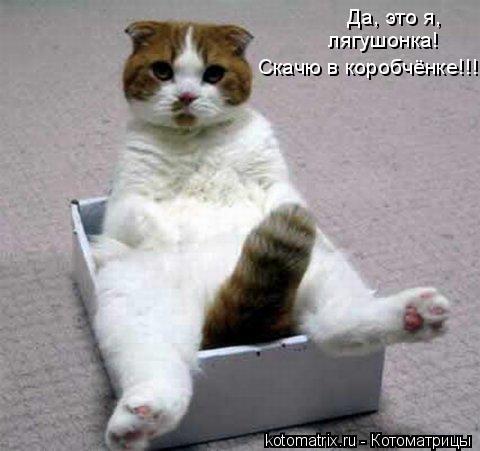 Котоматрица: Да, это я, лягушонка! Скачю в коробчёнке!!!