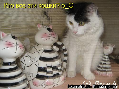 Котоматрица: Кто все эти кошки? о_О