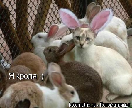 Котоматрица: Я кроля :)