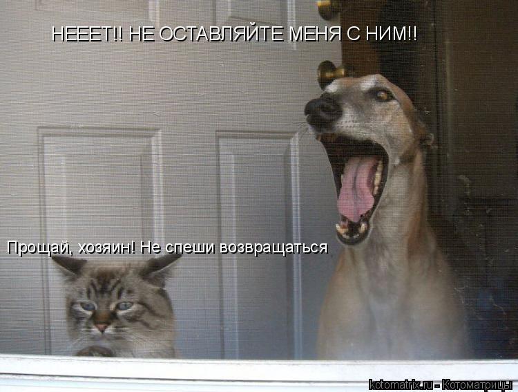Котоматрица: Прощай, хозяин! Не спеши возвращаться НЕЕЕТ!! НЕ ОСТАВЛЯЙТЕ МЕНЯ С НИМ!!