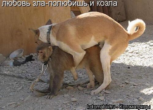 Котоматрица: любовь зла-полюбишь и козла