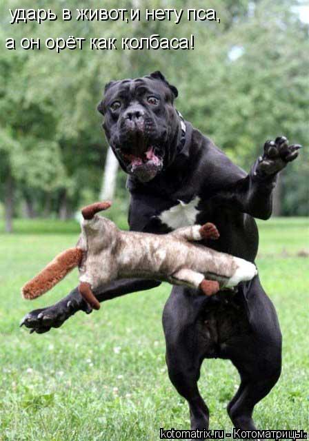 Котоматрица: ударь в живот,и нету пса, а он орёт как колбаса!