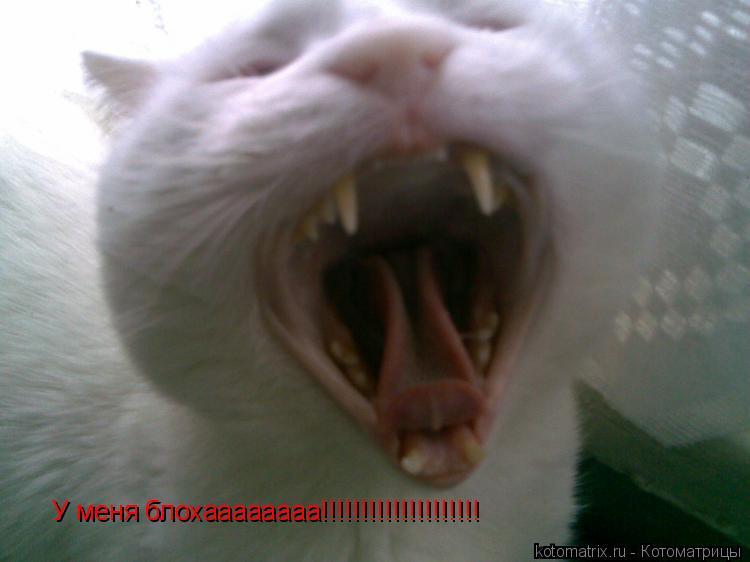 Котоматрица: У меня блохаааааааа!!!!!!!!!!!!!!!!!!!!