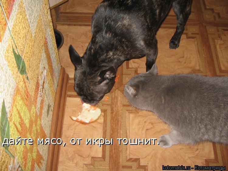 Котоматрица: дайте мясо, от икры тошнит.