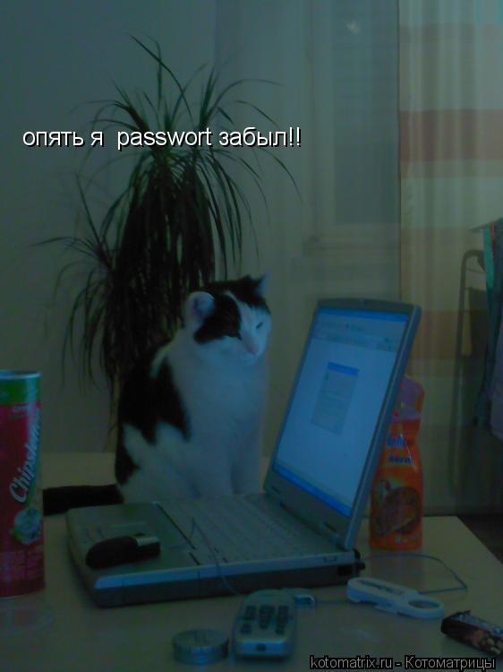 Котоматрица: опять я  passwort забыл!!