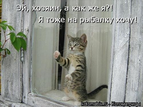 Котоматрица: Эй, хозяин, а как же я?! Я тоже на рыбалку хочу!