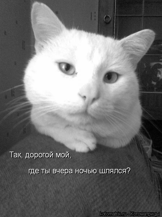 Котоматрица: Так, дорогой мой, где ты вчера ночью шлялся?
