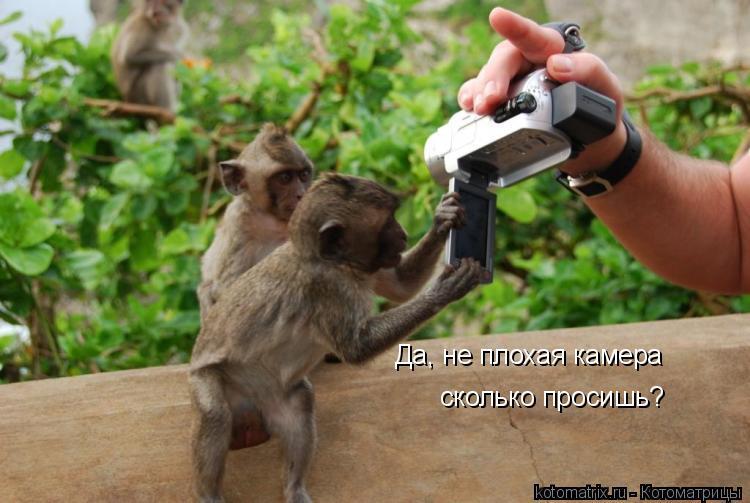 Котоматрица: Да, не плохая камера сколько просишь?