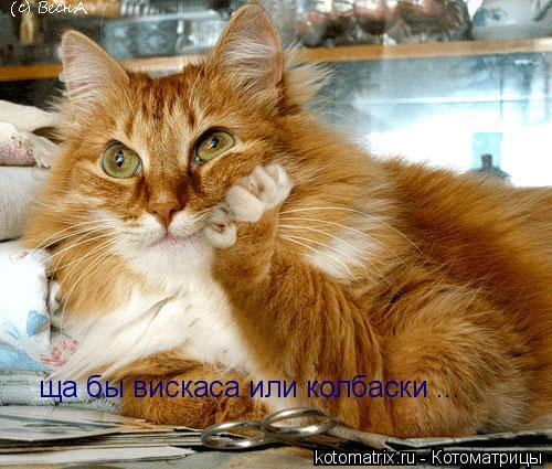 Котоматрица: ща бы вискаса или колбаски ...