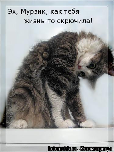 Котоматрица: Эх, Мурзик, как тебя жизнь-то скрючила!