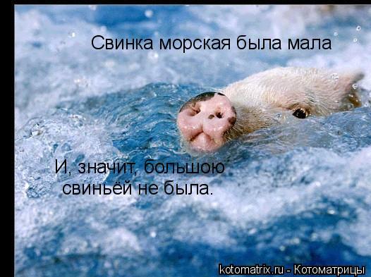 Котоматрица: Свинка морская была мала И, значит, большою   свиньёй не была.