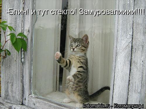 Котоматрица: -Блин! и тут стекло! Замуровалииии!!!!