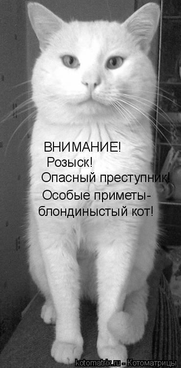 Котоматрица: ВНИМАНИЕ! Розыск! Опасный преступник! Особые приметы- блондиныстый кот!