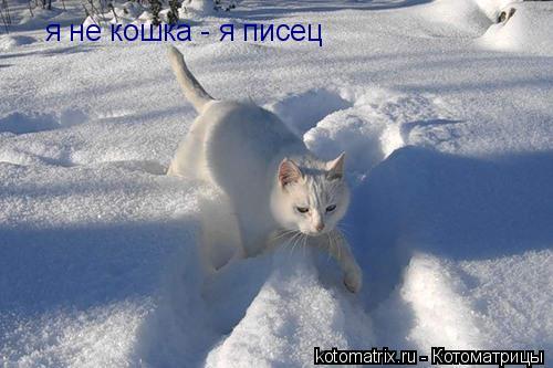 Котоматрица: я не кошка - я писец