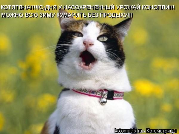 Котоматрица: КОТЯТВНА!!!!!СЁДНЯ У НАСОХРЕНЕННЫЙ УРОЖАЙ КОНОПЛИ!!! МОЖНО ВСЮ ЗИМУ КУМАРИТЬ БЕЗ ПРОДЫХУ!!!