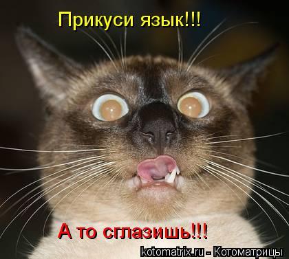 Котоматрица: Прикуси язык!!! А то сглазишь!!!