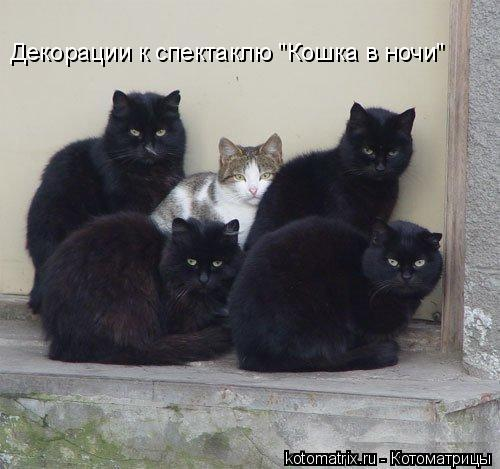 """Котоматрица: Декорации к спектаклю """"Кошка в ночи"""""""