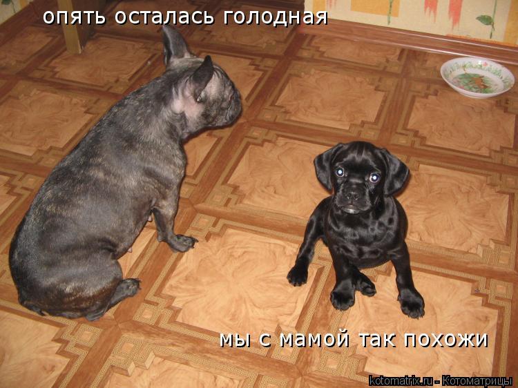 Котоматрица: мы с мамой так похожи опять осталась голодная