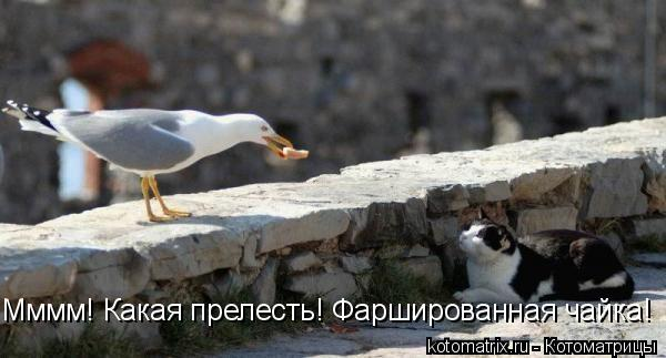 Котоматрица: Мммм! Какая прелесть! Фаршированная чайка!