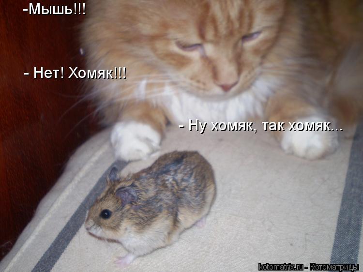 Котоматрица: -Мышь!!! - Нет! Хомяк!!! - Ну хомяк, так хомяк...