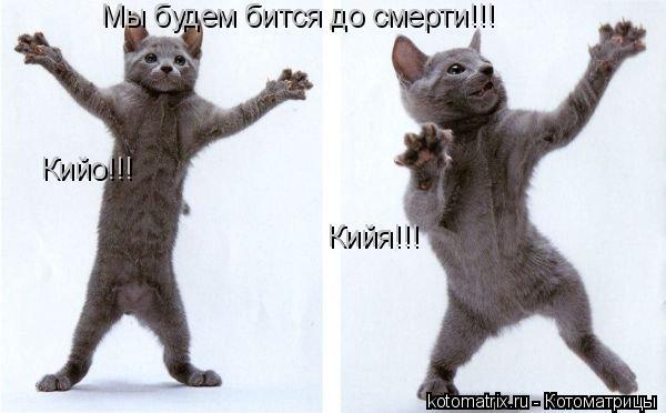 Котоматрица: Мы будем бится до смерти!!! Кийя!!! Кийо!!!