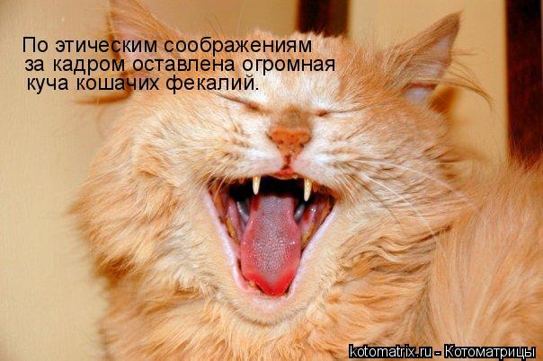 Котоматрица: По этическим соображениям за кадром оставлена огромная куча кошачих фекалий.