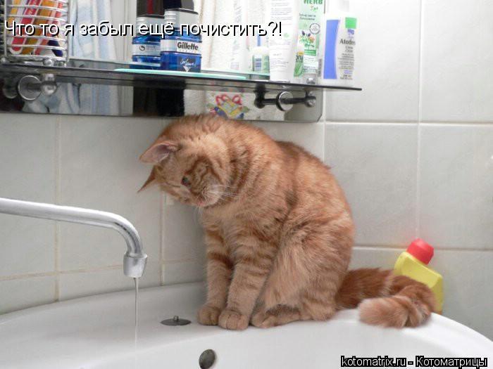 Котоматрица: Что то я забыл ещё почистить?!