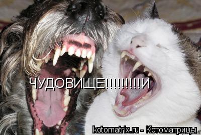 Котоматрица: ЧУДОВИЩЕ!!!!!!!!!И