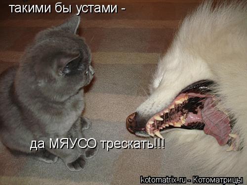 Котоматрица: такими бы устами -  да МЯУСО трескать!!!