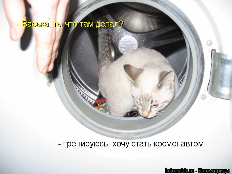 Котоматрица: - тренируюсь, хочу стать космонавтом  - Васька, ты что там делал?