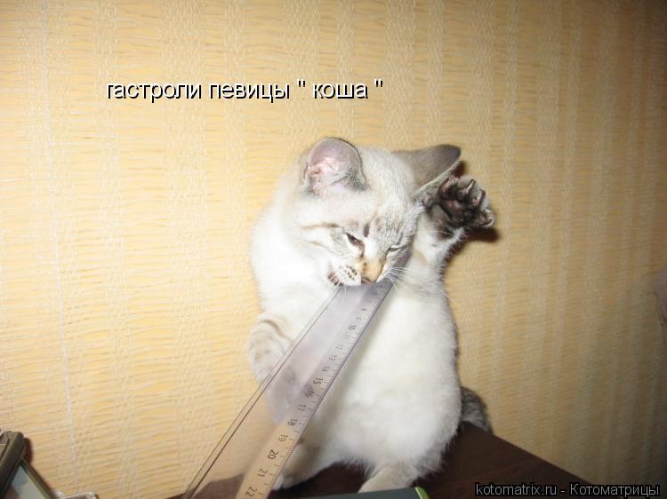 """Котоматрица: гастроли певицы """" коша """""""