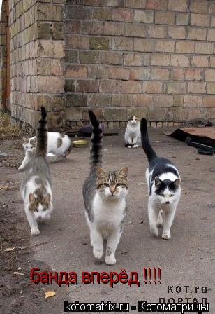 Котоматрица: банда вперёд !!!!