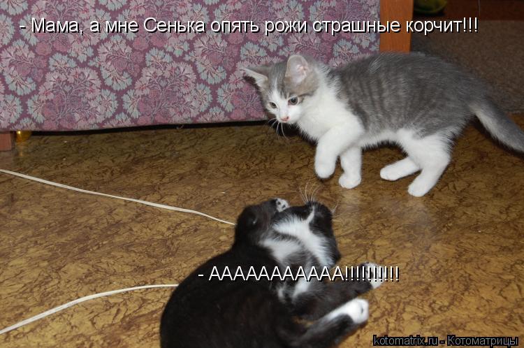 Котоматрица: - ААААААААААА!!!!!!!!!! - Мама, а мне Сенька опять рожи страшные корчит!!!