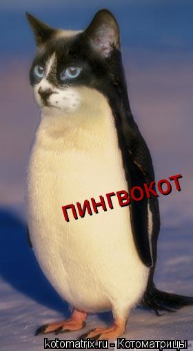 Котоматрица: пингвокот