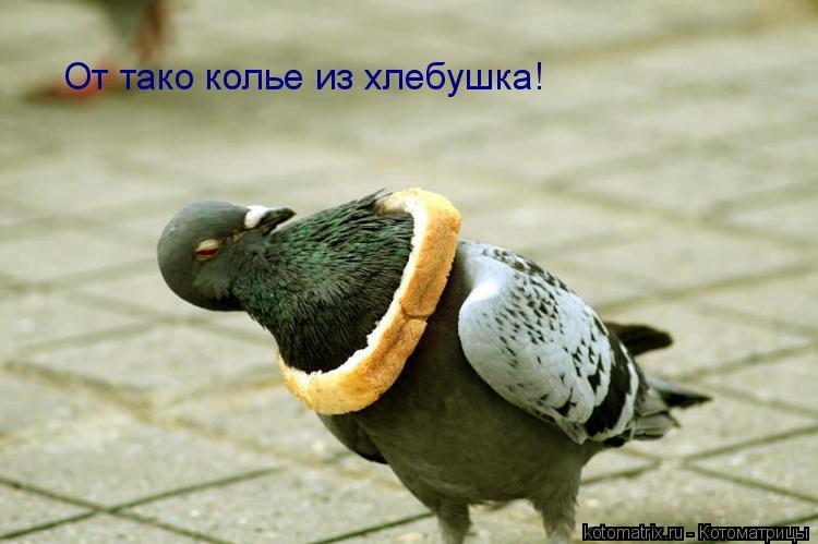 Котоматрица: От тако колье из хлебушка!