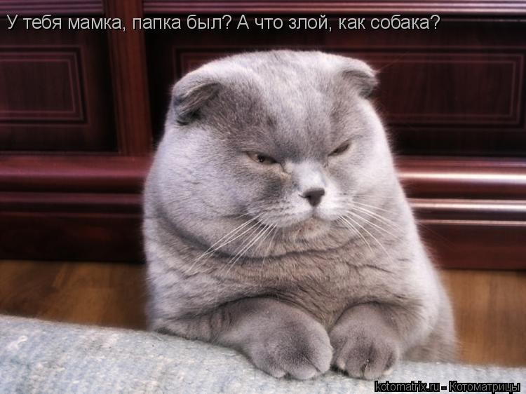 Котоматрица: У тебя мамка, папка был? А что злой, как собака?