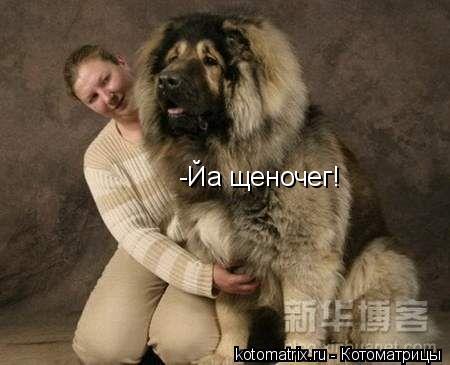 Котоматрица: -Йа щеночег!