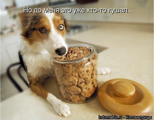 Котоматрица: ...Но до меня это уже хто-то кушал...