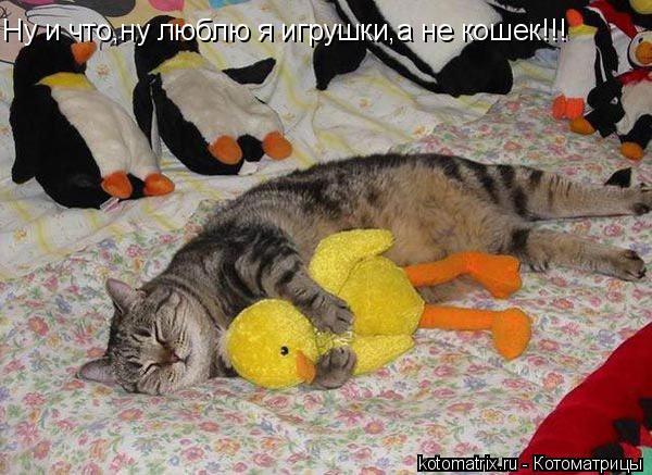 Котоматрица: Ну и что,ну люблю я игрушки,а не кошек!!!