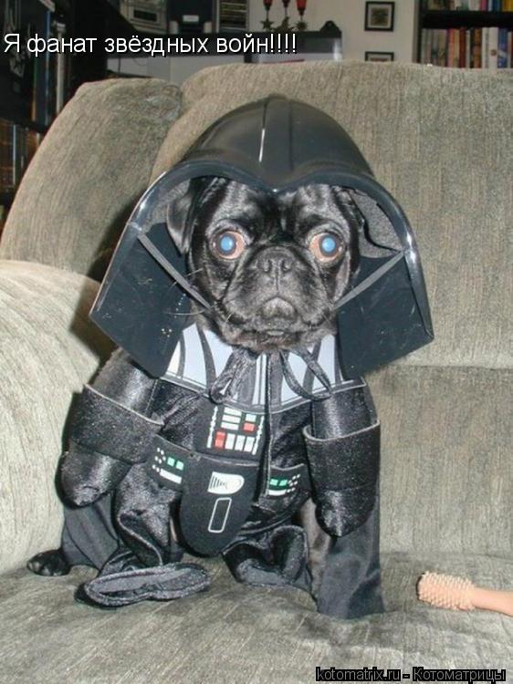 Котоматрица: Я фанат звёздных войн!!!!