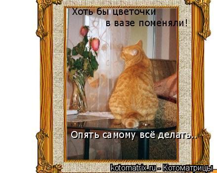 Котоматрица: Хоть бы цветочки  в вазе поменяли! Опять самому всё делать..