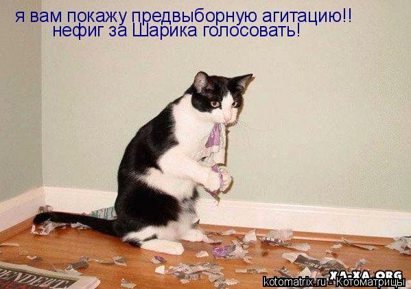 Котоматрица: я вам покажу предвыборную агитацию!! нефиг за Шарика голосовать!