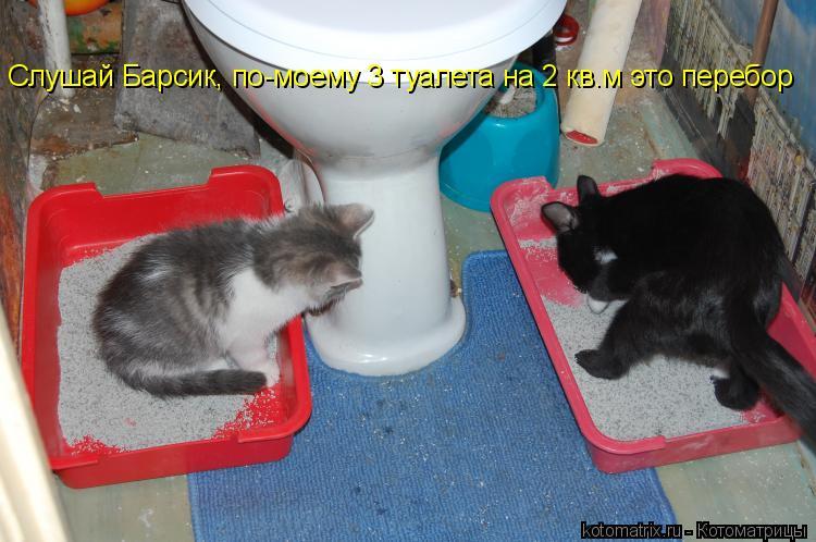 Котоматрица: Слушай Барсик, по-моему 3 туалета на 2 кв.м это перебор