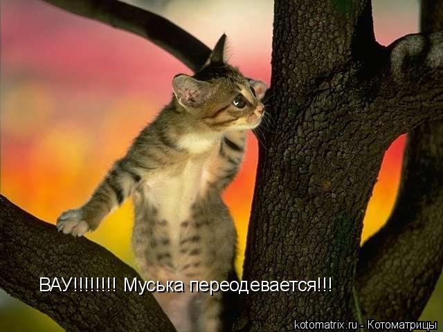 Котоматрица: ВАУ!!!!!!!! Муська переодевается!!!