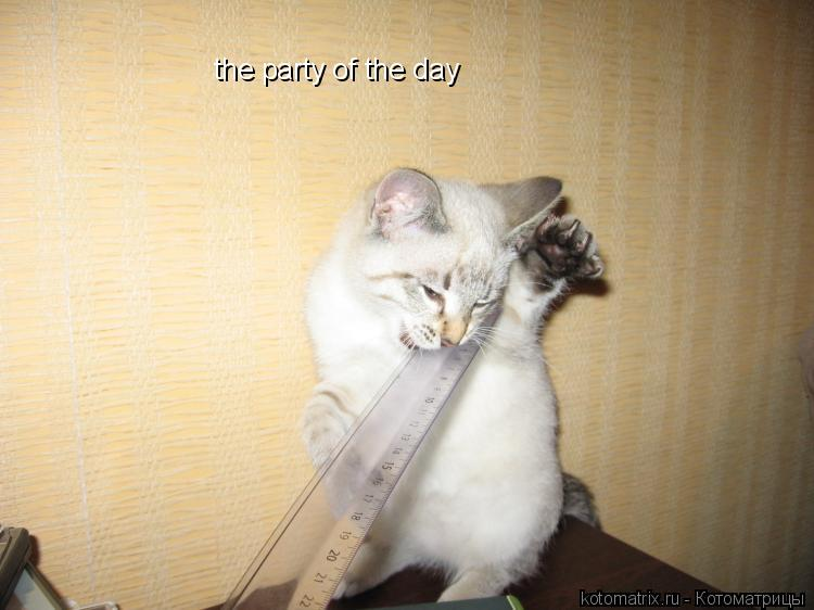Котоматрица: the party of the day