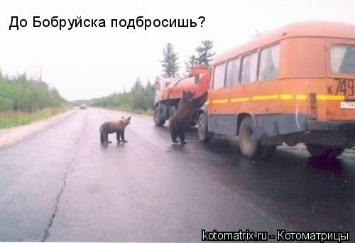 Котоматрица: До Бобруйска подбросишь?