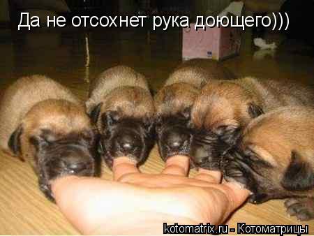 Котоматрица: Да не отсохнет рука доющего)))
