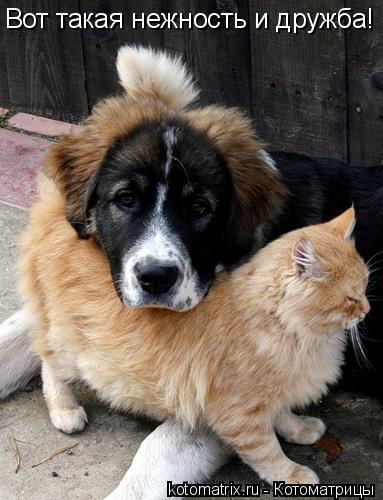 Котоматрица: Вот такая нежность и дружба!