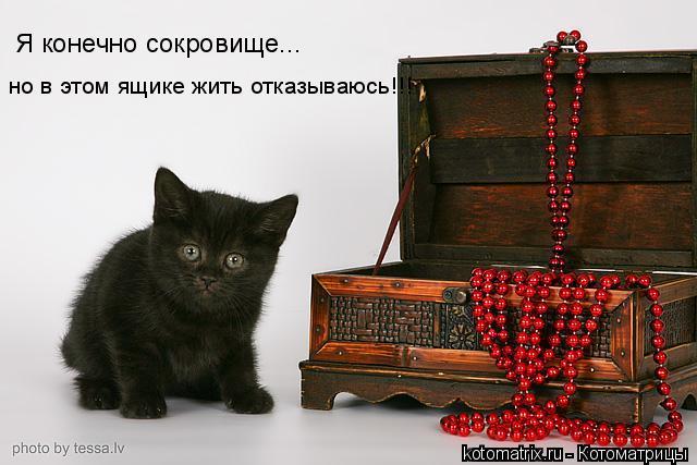 Котоматрица: Я конечно сокровище... но в этом ящике жить отказываюсь!!!